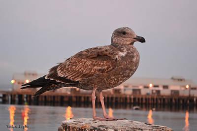 Eatery Digital Art - Cannery Row Sea Gull by Barbara Snyder