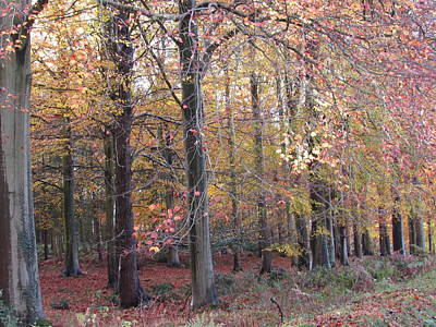 Photograph - Cannock Chase by Joyce Woodhouse