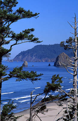 Photograph - Cannon Beach by Ginny Barklow