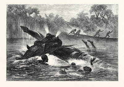 Zambesi River Drawing - Canoe Destroyed By A Hippopotamus On The River Zambesi by South African School