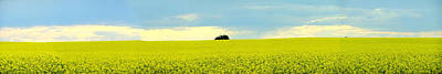 Photograph - Canola 004 by Philip Rispin