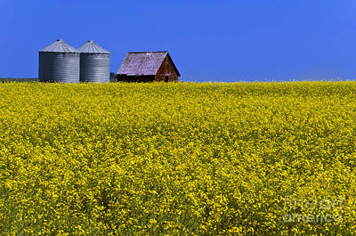 Photograph - Canola And Barn by Dee Cresswell