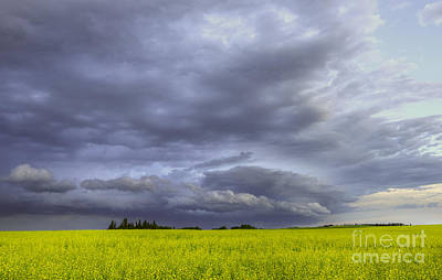 Prairie Storm Photograph - Canola And Storm by Dan Jurak