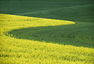 Contour Farming Photograph - Canola And Wheat by Latah Trail Foundation