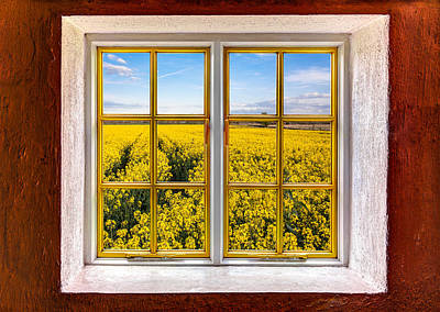 Photograph - Canola Canola by Semmick Photo