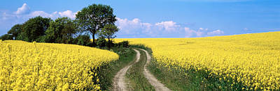 Dirt Roads Photograph - Canola, Farm, Yellow Flowers, Germany by Panoramic Images