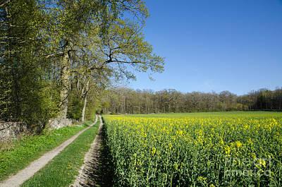 Photograph - Canola Field by Kennerth and Birgitta Kullman