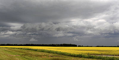 Agronomy Photograph - Canola Field Storm Coming, Leduc by Bernard Dupuis