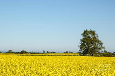 Photograph - Canola Fields Landscape by Kennerth and Birgitta Kullman