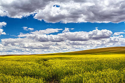 Canola Fields Art Print by Robert Bynum