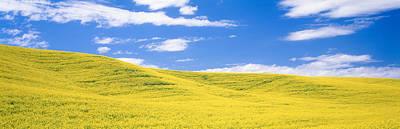Canola Fields, Washington State, Usa Art Print by Panoramic Images