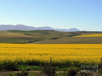 Flower Photograph - Canola Yellow by Marietjie Du Toit