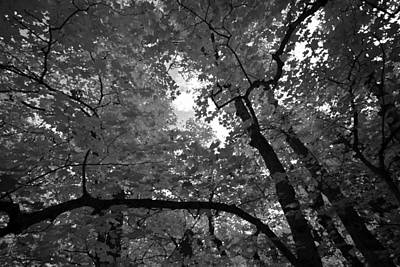 Photograph - Canopy by Tom Kelly