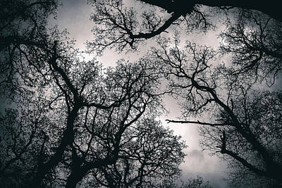 Photograph - Canopy Treetop  by Fabrizio Troiani
