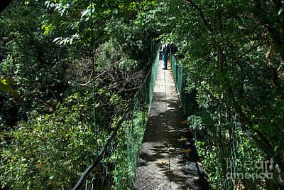 Panajachel Photograph - Canopy Walk by Mark Newman