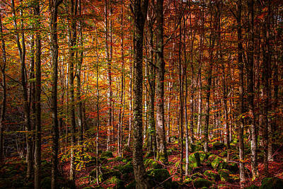 Orangem Tree Photograph - Can't Find My Way Home by Stefano Termanini
