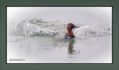 Photograph - Canvasback Splash by LeeAnn McLaneGoetz McLaneGoetzStudioLLCcom