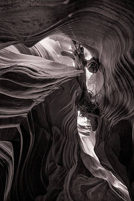 Photograph - Canyon Driftwood by Brad Brizek