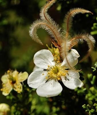 Photograph - Canyon Flower by Sarah Pemberton