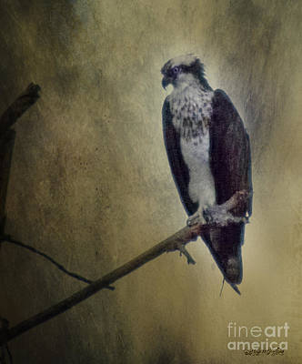 Digital Art - Canyon Lake Osprey II by Rhonda Strickland