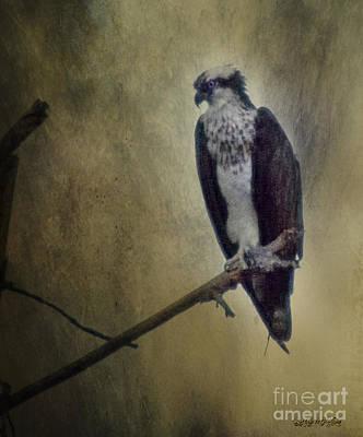 Digital Art - Canyon Lake Osprey II by Rhonda Strickland