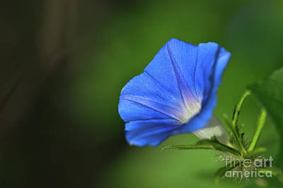 Winter Animals Rights Managed Images - Canyon Morning Glory 2 Royalty-Free Image by Al Andersen