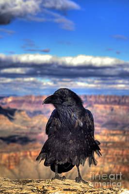 Canyon Raven Art Print