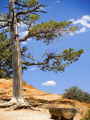 Photograph - Canyon Rim by Brenda Kean