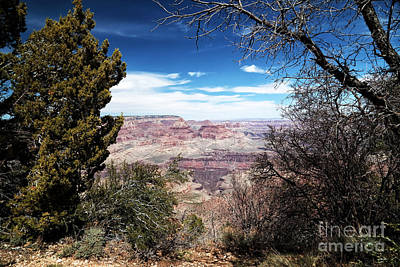 Photograph - Canyon View Between The Trees by John Rizzuto