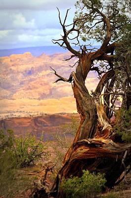 Canyon Vista 1 Print by Marty Koch