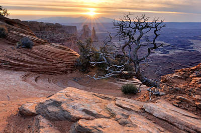 Canyonlands Sunrise Landscape With Dry Tree Art Print by Yevgen Timashov