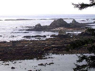 Photograph - Cape Arago Sea Lion Colony by Will Borden