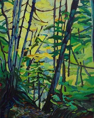 Cape Breton Woodland Art Print