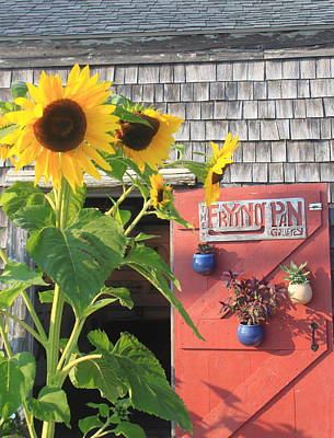 Photograph - Cape Cod Art Gallery And Sunflowers by John Burk