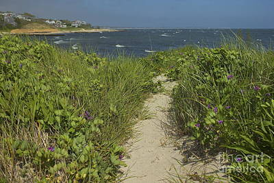 Photograph - Cape Cod Beach Path by Amazing Jules
