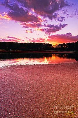 Cape Cod Cranberry Bog Sunset Art Print by Matt Suess
