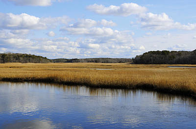Cape Cod Marsh Art Print by Luke Moore