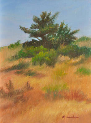 P Town Painting - Cape Cod Pine by Phyllis Tarlow