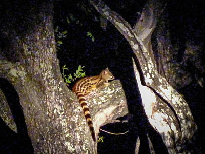 Photograph - Cape Genet by Gregory Daley  PPSA