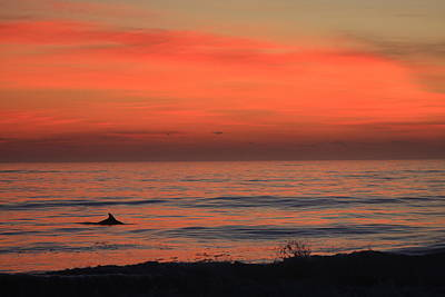Caravaggio - Cape Hatteras Dolphin 2 by Mountains to the Sea Photo