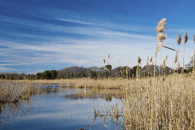 Photograph - Cape May Marshes by Jennifer Ancker