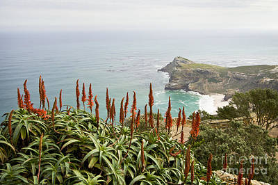 Photograph - Cape Of Good Hope by Dennis Hedberg