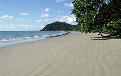 Photograph - Cape Tribulation Beach Australia by David Clode