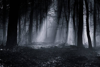 Eerie Photograph - Capela Forest by Julien Oncete