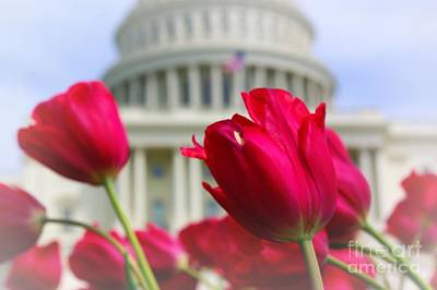 Art Print featuring the photograph Capital Flowers  by John S