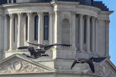 Photograph - Capitol Dome Geese by Dakota Light Photography By Dakota