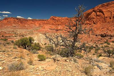 Photograph - Capitol Reef Cliffs by Adam Jewell