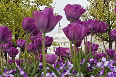 Photograph - Capitol With Tulips by Karen Saunders
