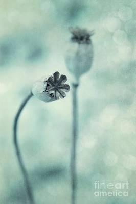 Seed Pod Photograph - Capsules Series by Priska Wettstein