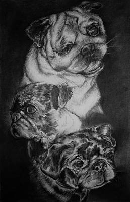 Brindle Drawing - Captain Sophie And Evie by Melissa Sink